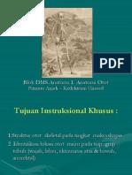 19.Anatomi Otot (Dr.fitranto)