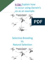 natural selection vs selective breeding pp