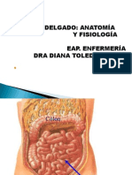 3 intestinoDelgado.ppt