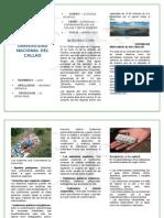 Triptico Contaminacion Del Rio Chillon