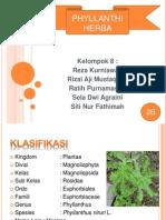 Phyllanthi Herba