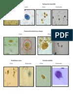 Fotos Protozoários - Parasitologia