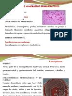 Bacilos Anerobios Gramnegativos 2012