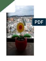 Florecita Solar