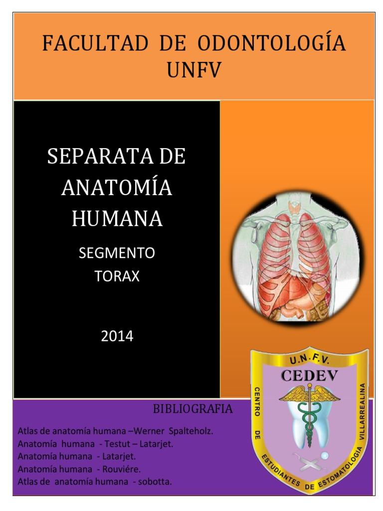 Separata Anatomia Humana