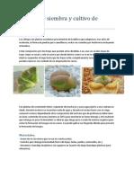 Manual de siembra y cultivo de lithops