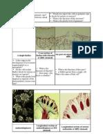 Bryophytes Morphology