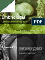 laminasde embriologia