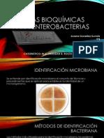 pruebasbioqumicas