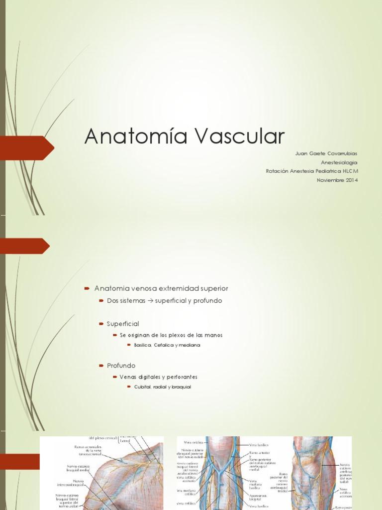 Perfecto Las Venas De Las Extremidades Superiores Anatomía Ornamento ...