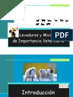 Levaduras y Micosis (1)