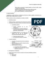 Resumen t. 9 Núcleo Mitoc Cloropl