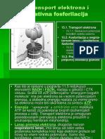 15 - biohemija transport elektrona i oksidativna fosforilacija (1).ppt