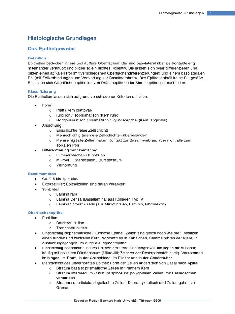Groß Freie Oberfläche Definition Anatomie Ideen - Anatomie Von ...