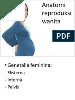 anatomi repro kbk.ppt