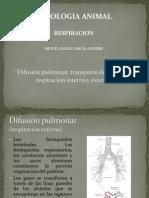 Difusión Pulmonar, Transporte de O2 y
