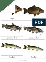 Nomenclature Poisson Mer Eau Douce