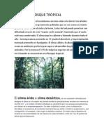 Climas de Bosque Tropical