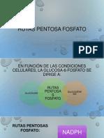 Rutas Pentosa Fosfato, Glicolisis, Glucogenólisis, Gluconeogenesis, Glugenogenesis