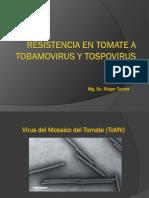 Resistencia en Tomate a Tobamovirus y Tospovirus PIMPINIFOLIO vs S LICOPERSICUM