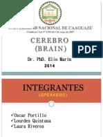Cerebro- Corteza Cerebral 2014.pptx