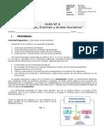 Guía 4 Prot - Enz y Ác Nucleicos Iº Medio La Misión 2013