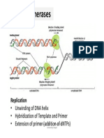 presentation8 DNA replication 2.pdf
