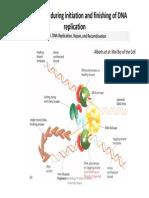 Presentation10 Initiation & finishing of DNA replication.pdf