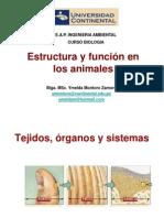 Estructura y Función Animales