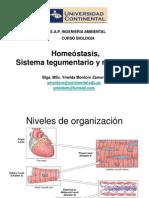 Sistema Tegumentario, Muscular