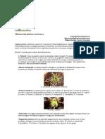 Hibernacion Www.plantascarnivoras.es