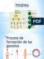 GAMETOGENIA EXPOSICION - Proceso de formación de los gametos