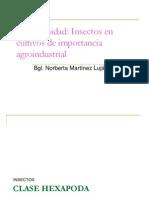 BIODIVERSIDAD INSECTOS[1].ppt