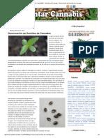 PLANTAR CANNABIS - Semillas de Cannabis _ Germinación de Semillas de Cannabis