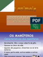 Classificação animais