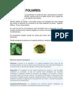 8_manchas_foliares.pdf