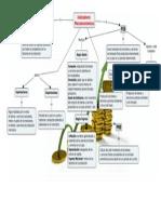 Economía-Mapa Conceptual