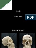 1-skulls-frontal