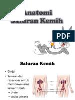 Anatomi Saluran Kemih GUS