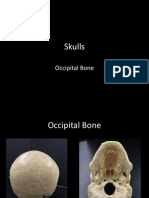 5-skulls-occipital