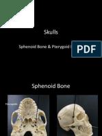 9aa-skulls-sphenoid and ajacent
