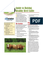Guide to Raising Healthy Beef