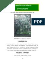 Styrax Glabrescens