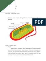 Gambar Sel Vegetatif Bakteri