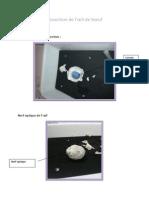 Dissection de l'oeil.docx