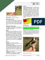 jilguero.pdf