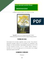 Tabebuia donnell-smithii.pdf