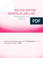 Case 2-Embrio Sistem Genitalia Laki-laki