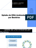 Uptake de DNA Ambiental Por Bactérias