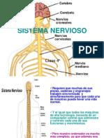 Clase 4 Sistema Nervioso